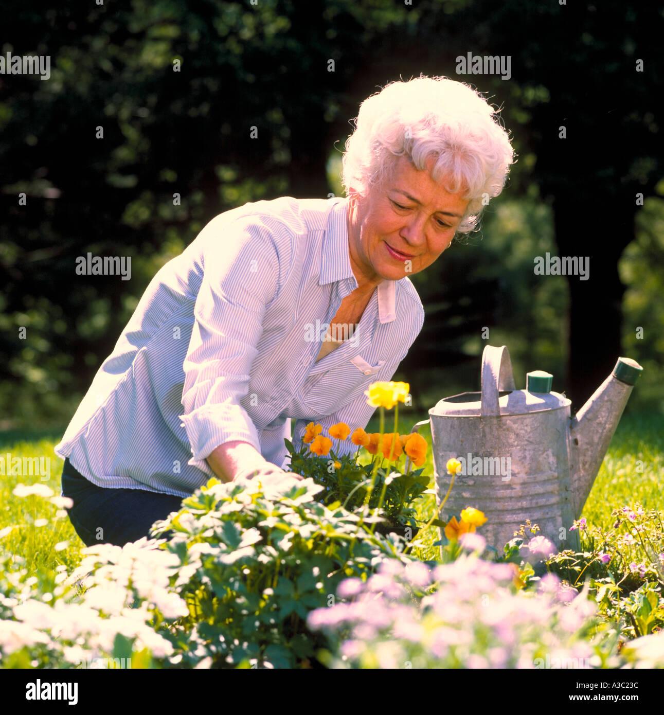 Senioren-Dame arbeitet in ihrem Garten Blumen Pflanzen und wässern wird vorbereitet Stockbild