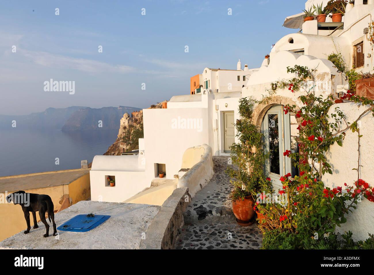 Häuser im typisch kykladischen Architektur, Oia, Santorini, Griechenland Stockfoto
