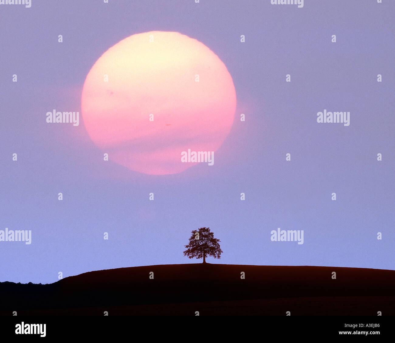 DE - Bayern: Sonnenuntergang über Baum Stockbild