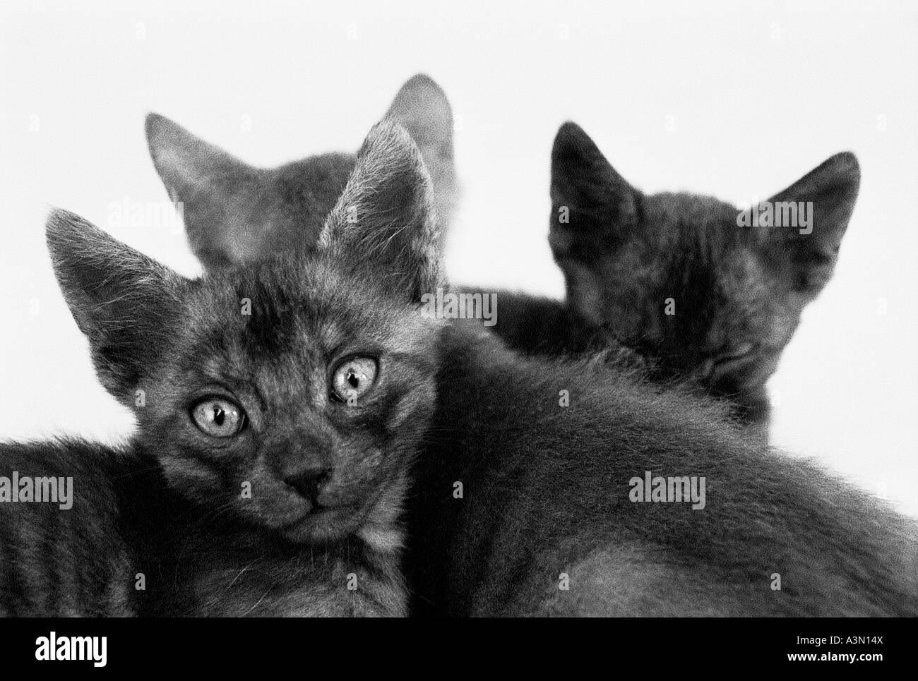 Junge Katzen Stockbild