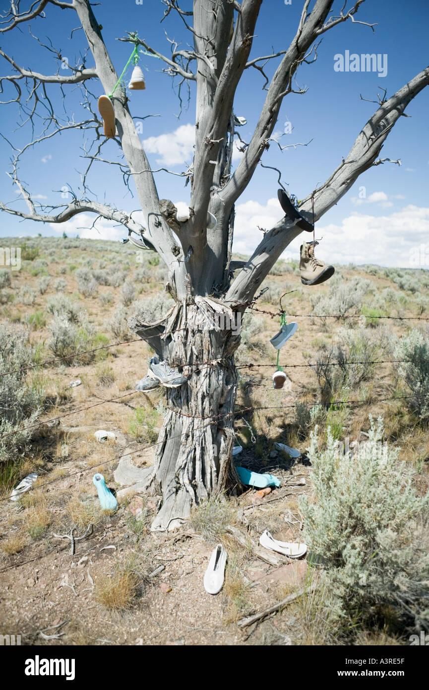 Schuhe Von Baum Im östlichen Oregon Hängen