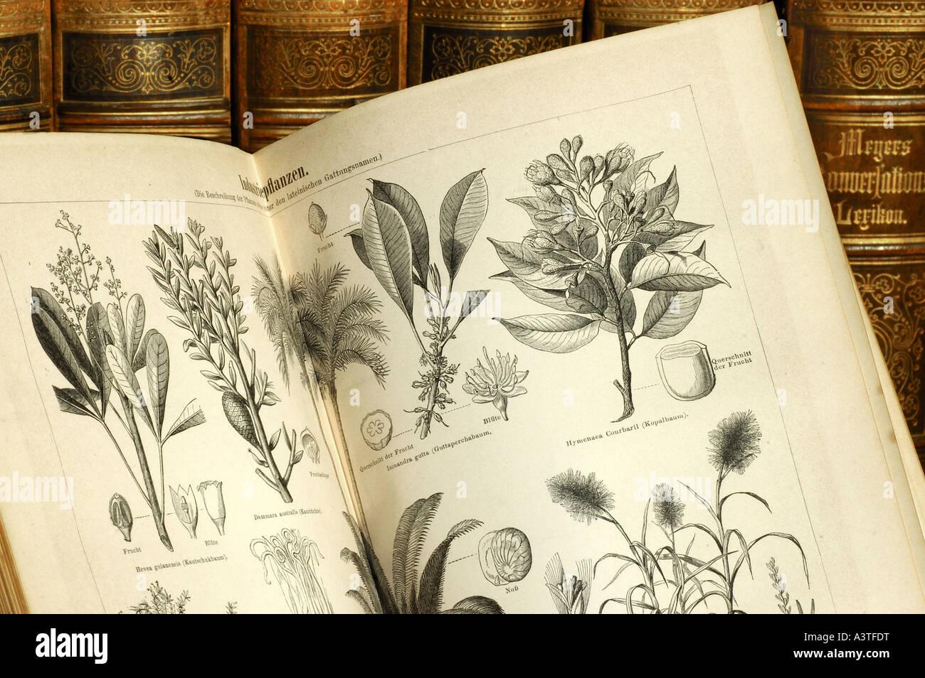 Illustrationen von Nutzpflanzen in einem Volumen von einer alten Ausgabe des Meyers Lexikon Stockbild
