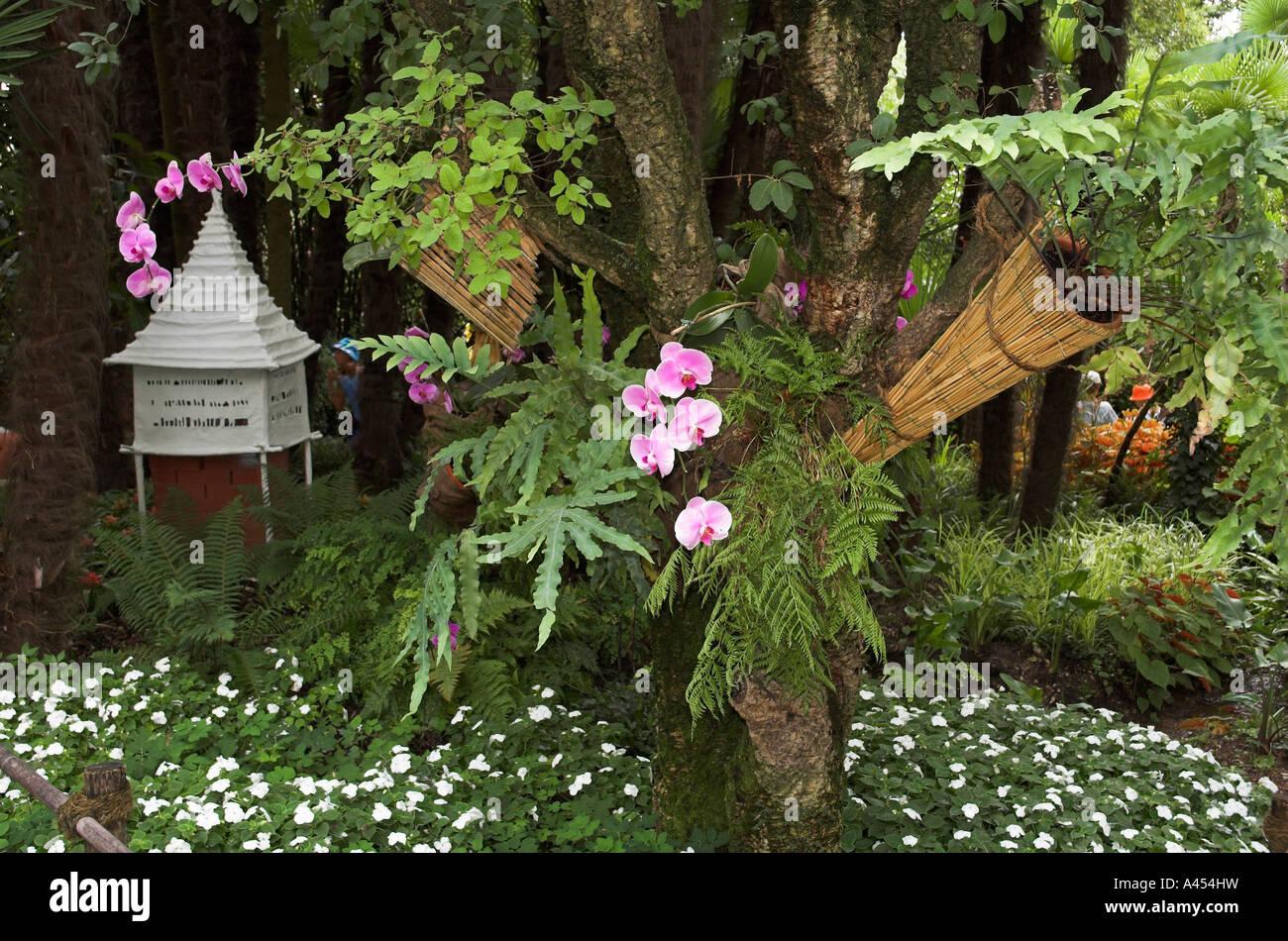 Orchideen Wachsen Auf Einem Baum In Der Heller Botanischer Garten