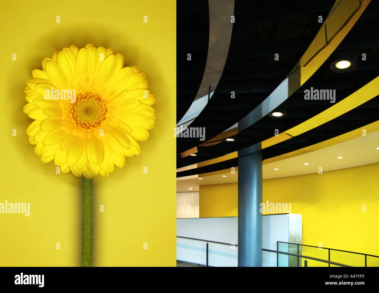 Rathaus innen London, gegenübergestellt mit gelber Blume Stockbild