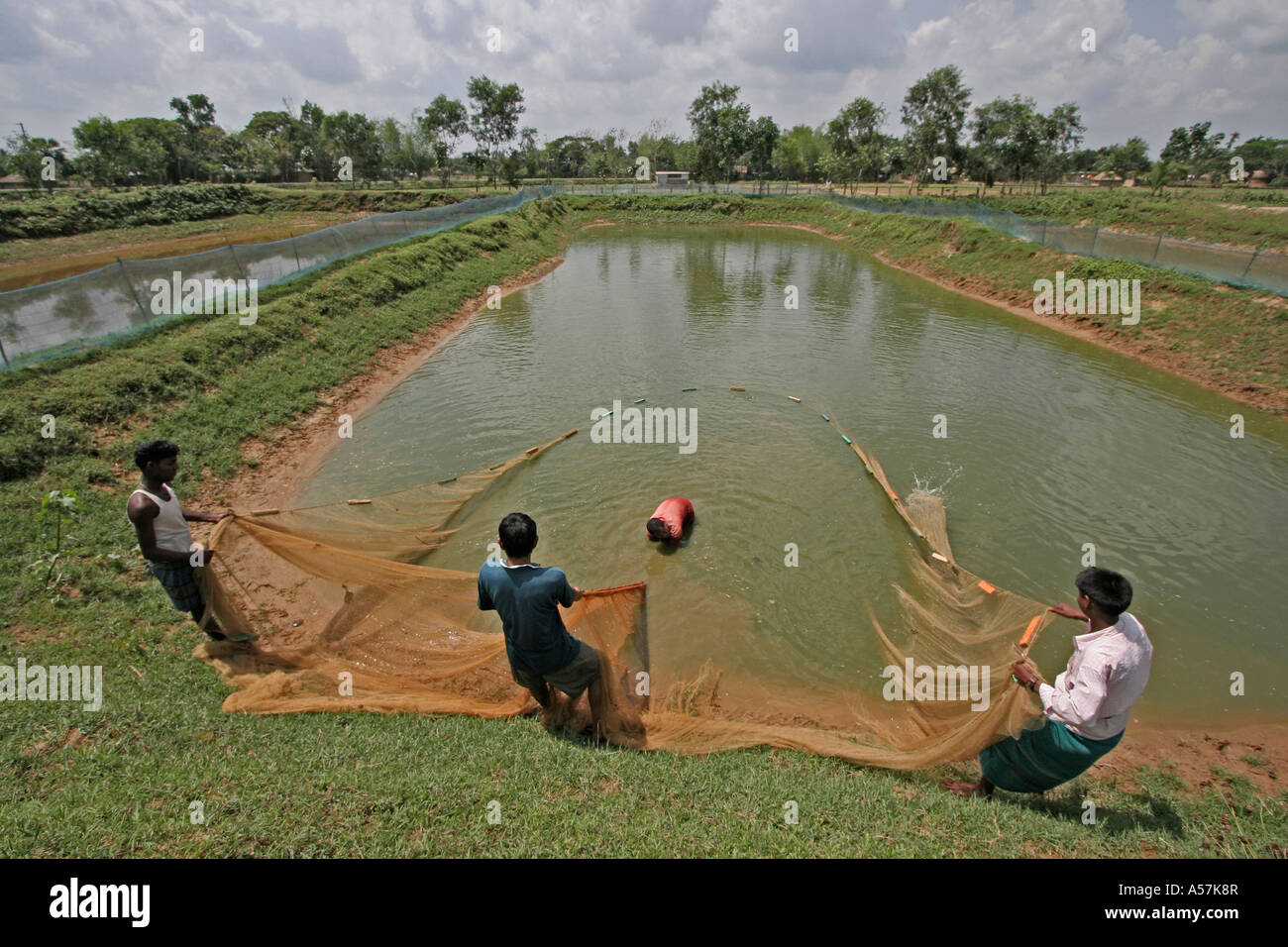 Pond fish buying stockfotos pond fish buying bilder alamy for Jungfische im teich