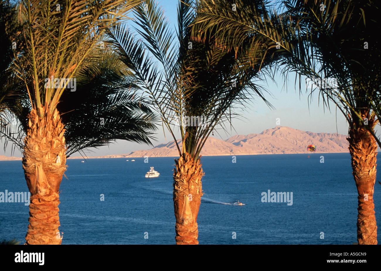 Blick von Sharm el Sheikh durch Palmen zur Tiran Insel Meerenge von Tiran Sinai Ägypten Rotes Meer Riviera Stockbild