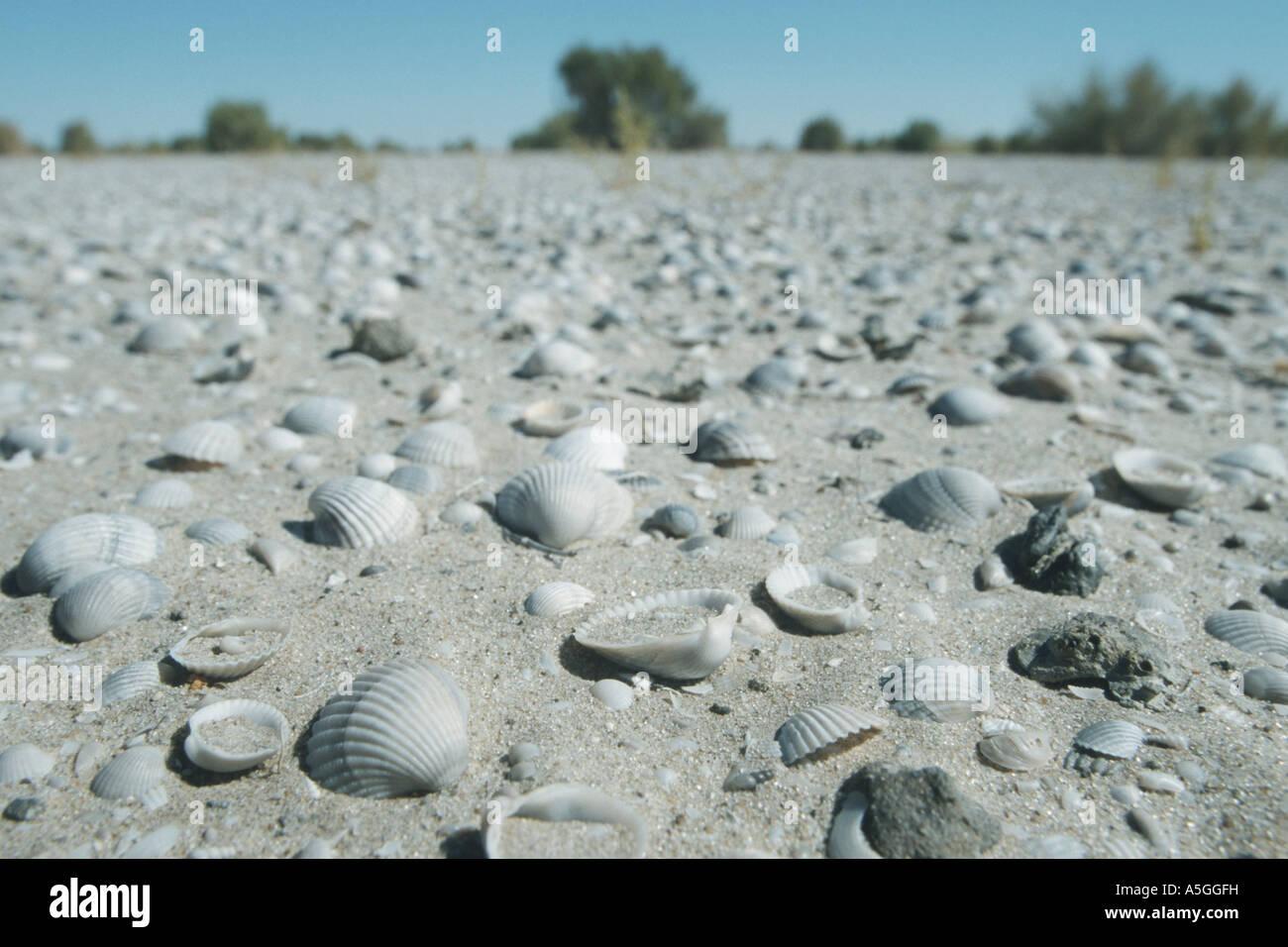 Aralsee Katastrophe