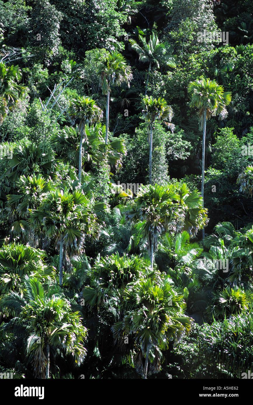 Forstwirtschaft der Praslin Nationalpark Praslin Insel Seychellen Stockbild