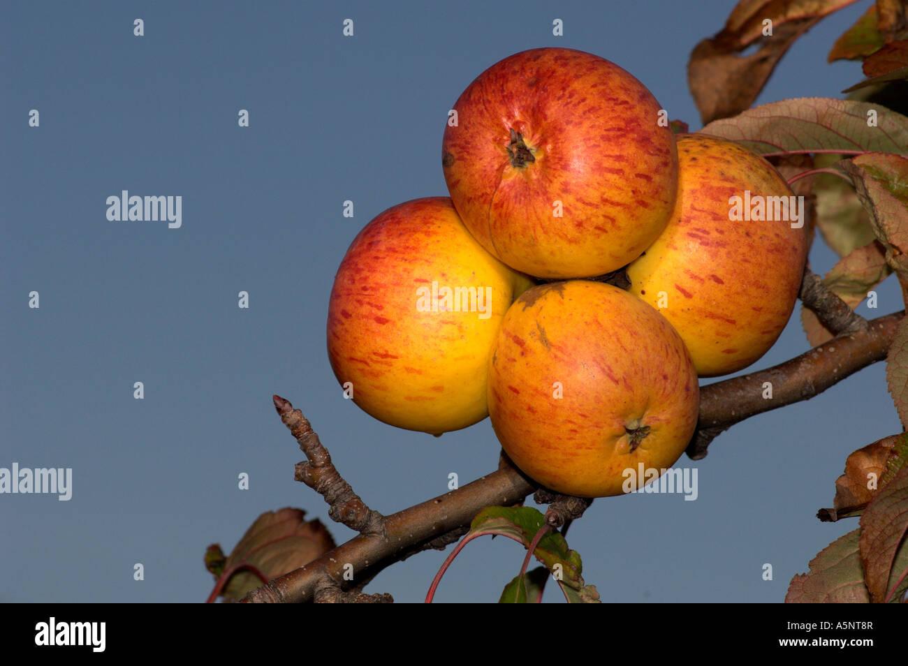Bühler Gartenbau bühler stockfotos bühler bilder alamy