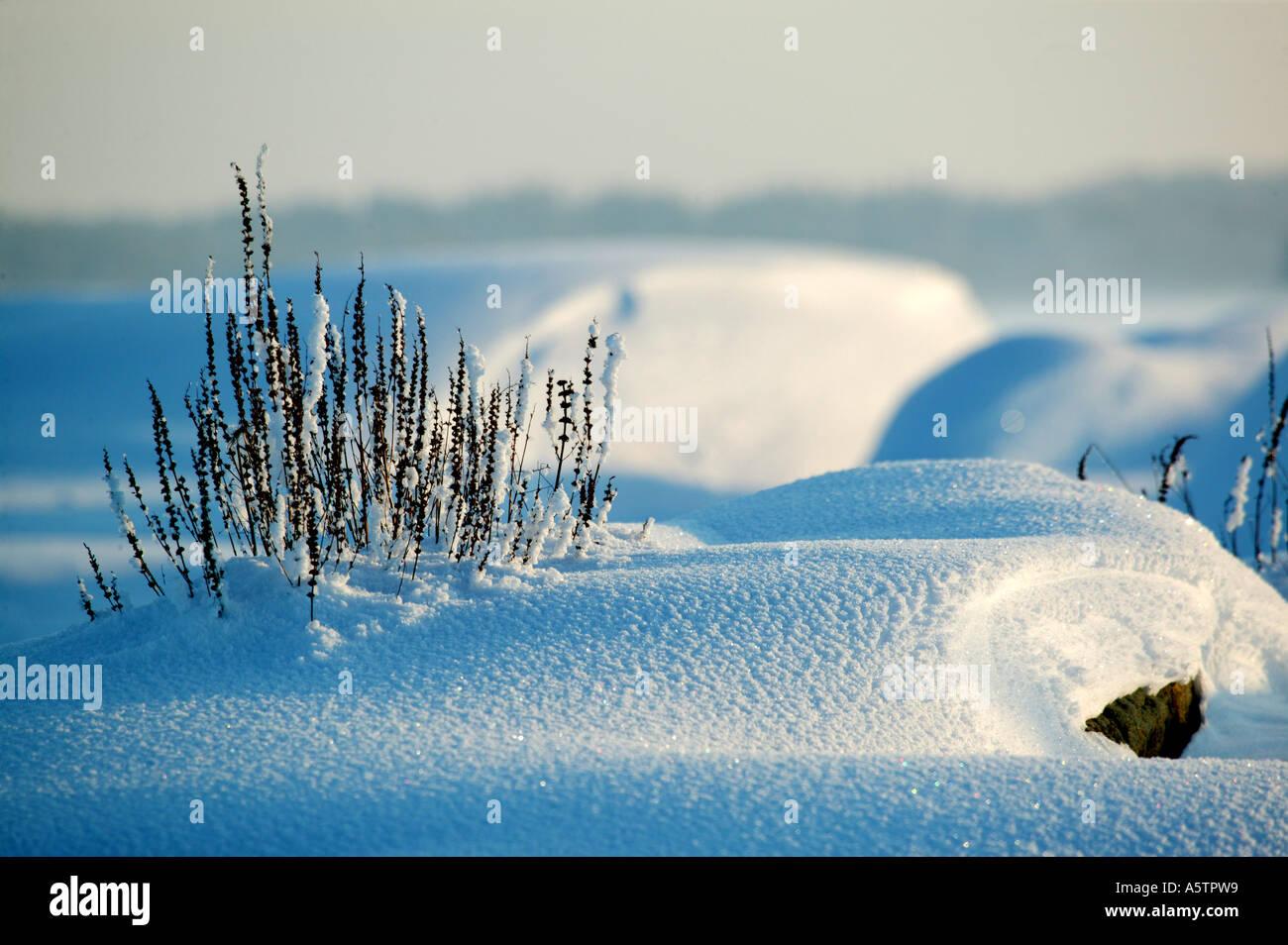 Winter Abend an der kleinen Inseln im See Moskjaera Råde Vansjø, Kommune, Østfold fylke, Norwegen. Stockbild