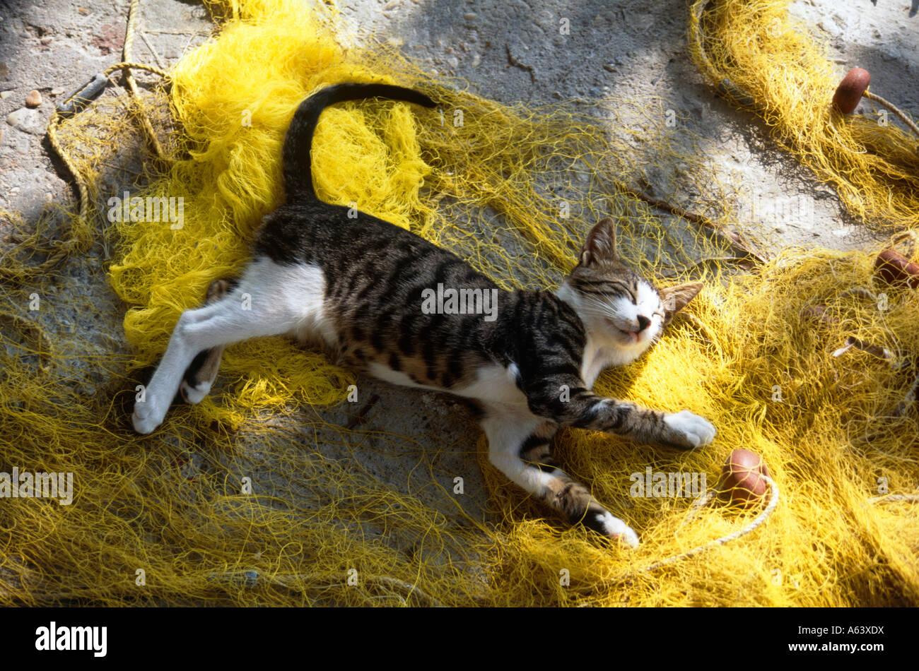 Katze schläft auf Fishernet Insel Samos Archipel von Ägäischen Inseln Griechenland Stockbild