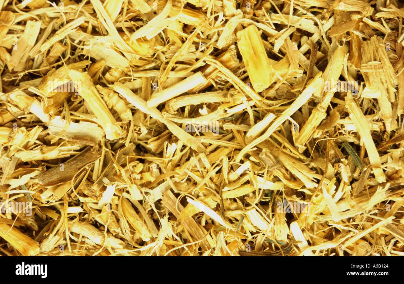 QUECKENWURZEL Heilpflanze Wurzel der Quecken Elymus repens Stockfoto