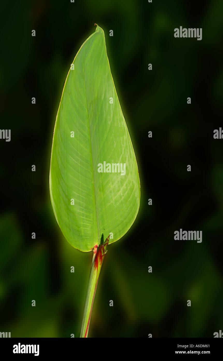 Großartig Alligator Färbung Blatt Fotos - Beispiel Wiederaufnahme ...