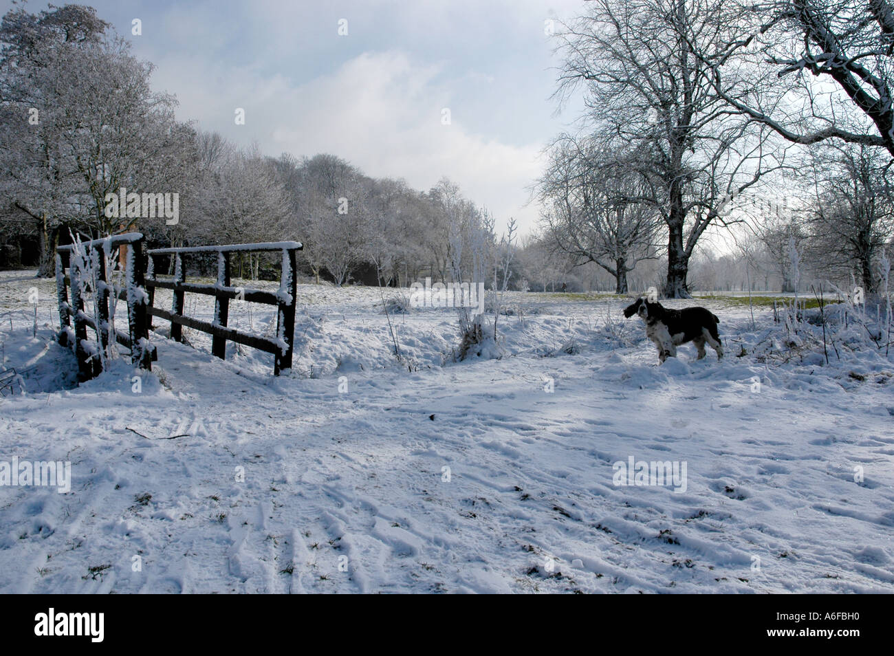 Rosie im Schnee Stockbild