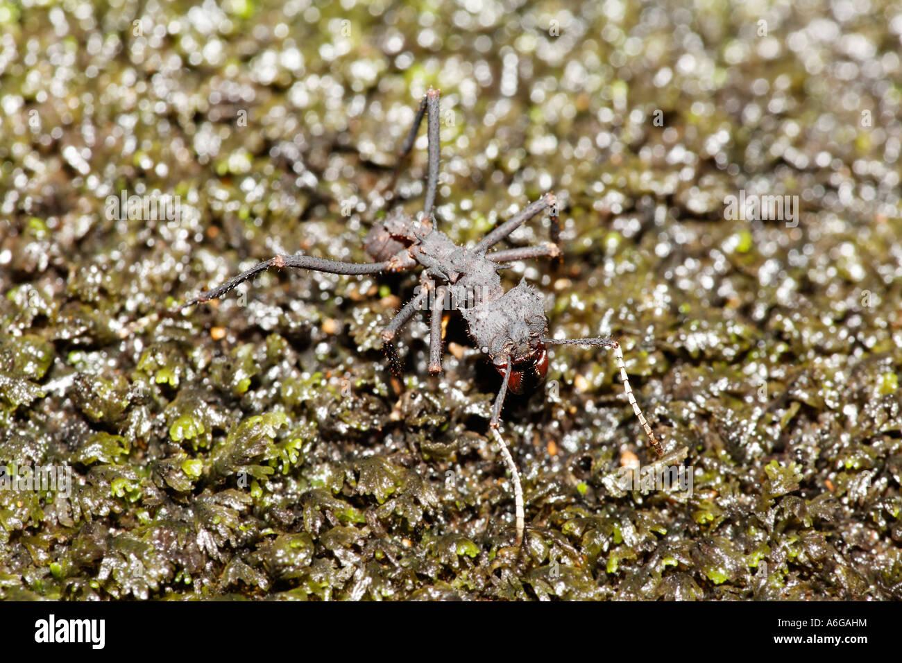 Niedlich Ameisen Färbung Seite Fotos - Malvorlagen-Ideen ...