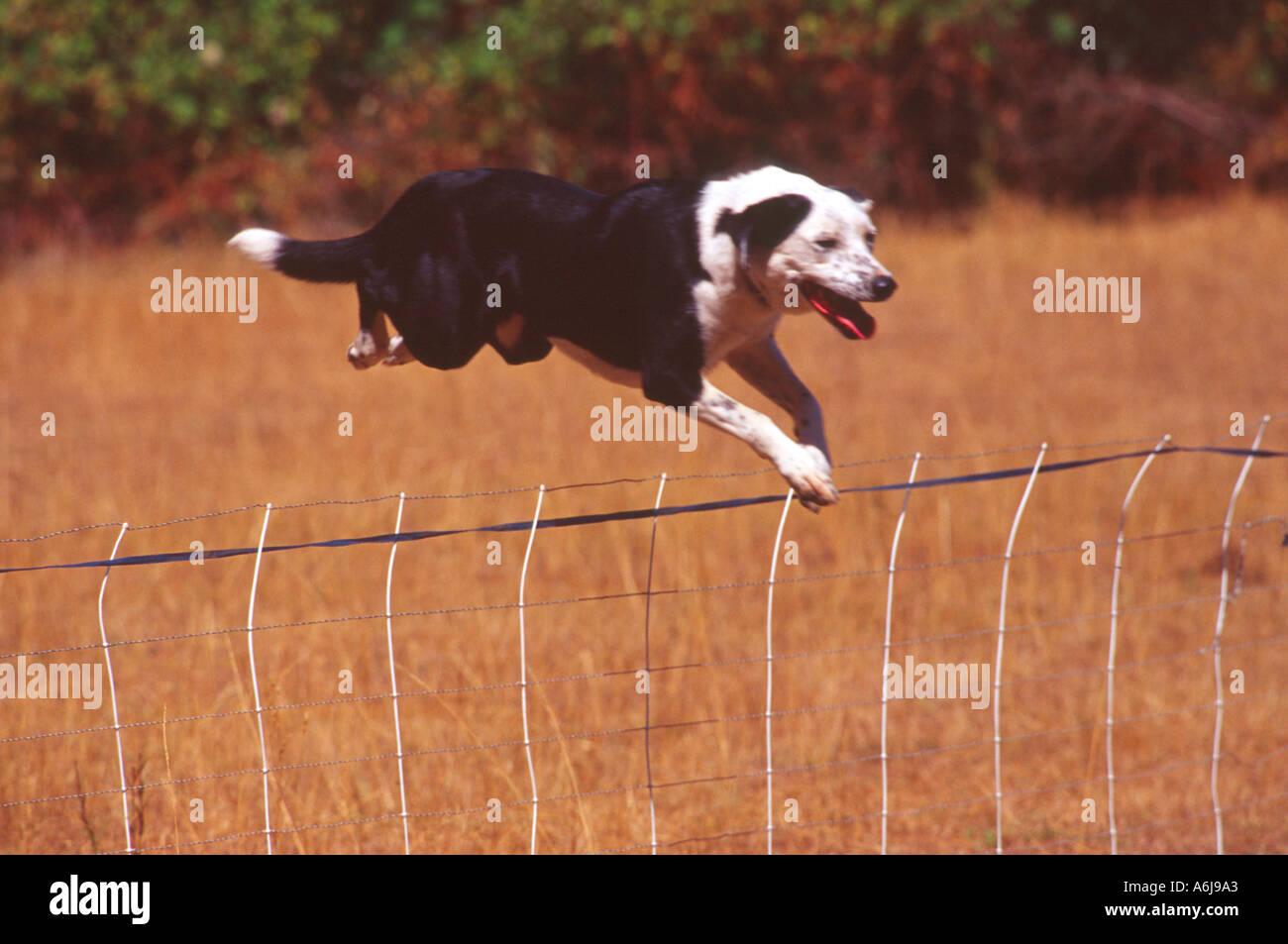 Ungewöhnlich Im Boden Hund Zaun Draht Fotos - Elektrische Schaltplan ...