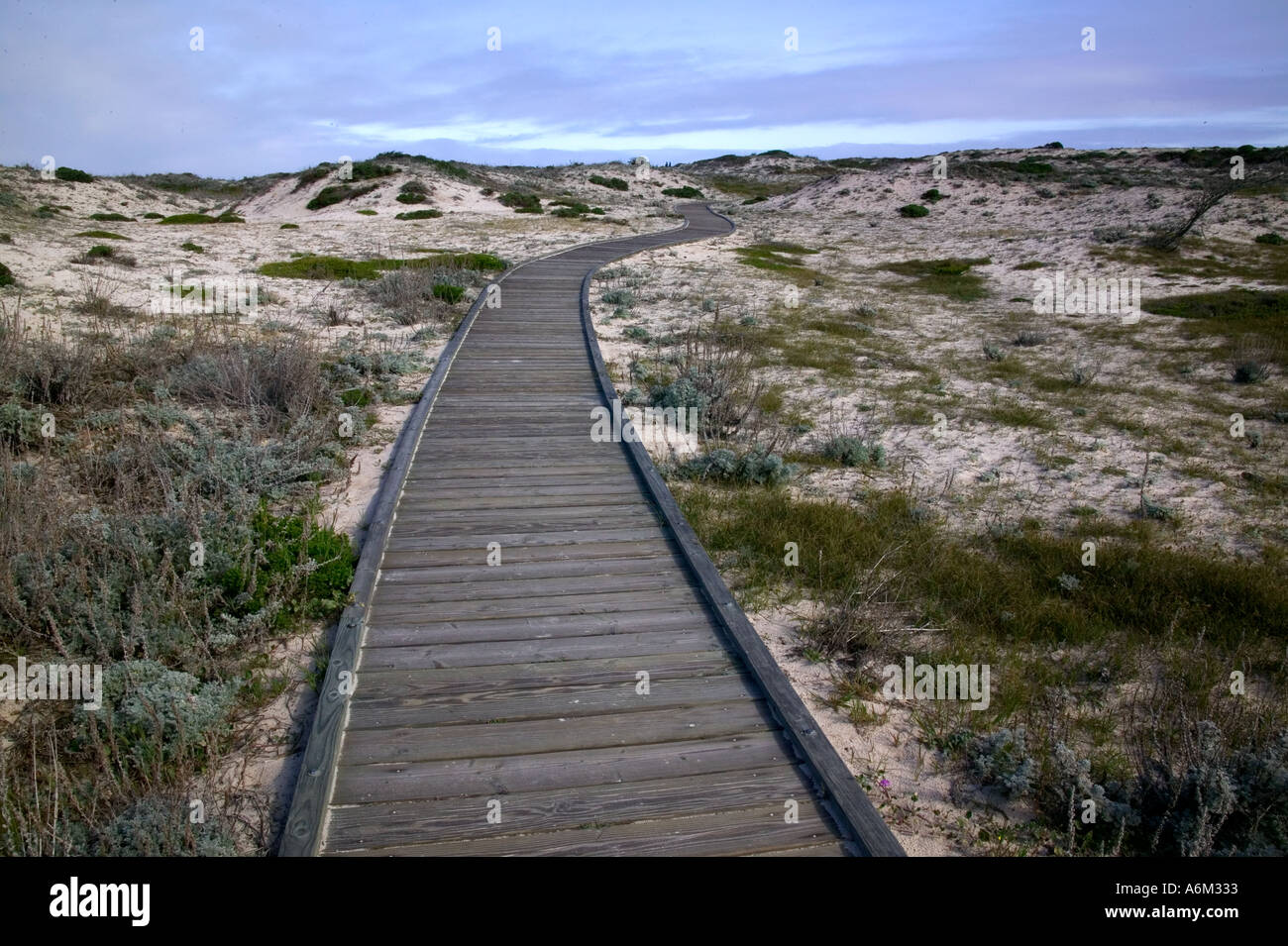 Boardwalk durch Dünen entlang der kalifornischen Küste in der Nähe von Carmel Stockfoto