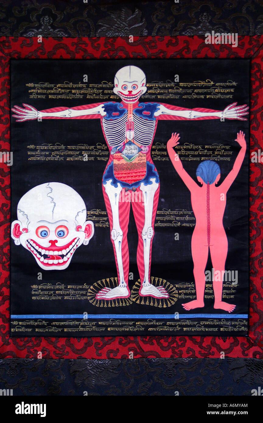 Tibetische Bildung Malerei medizinische Thangka - Schädel und Körper ...