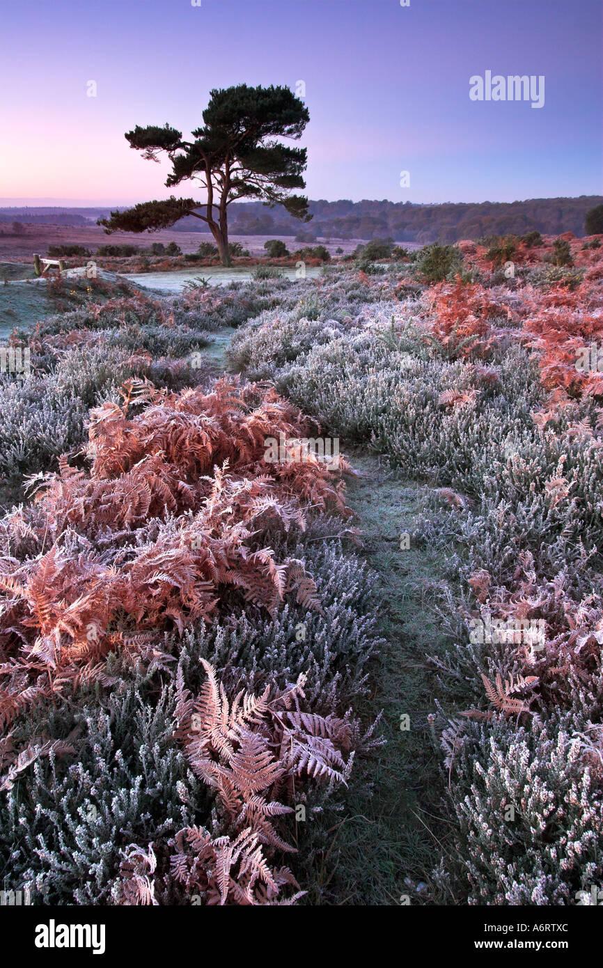Morgendämmerung auf einem kalten und frostigen Morgen im New Forest National Park in Hampshire Stockbild