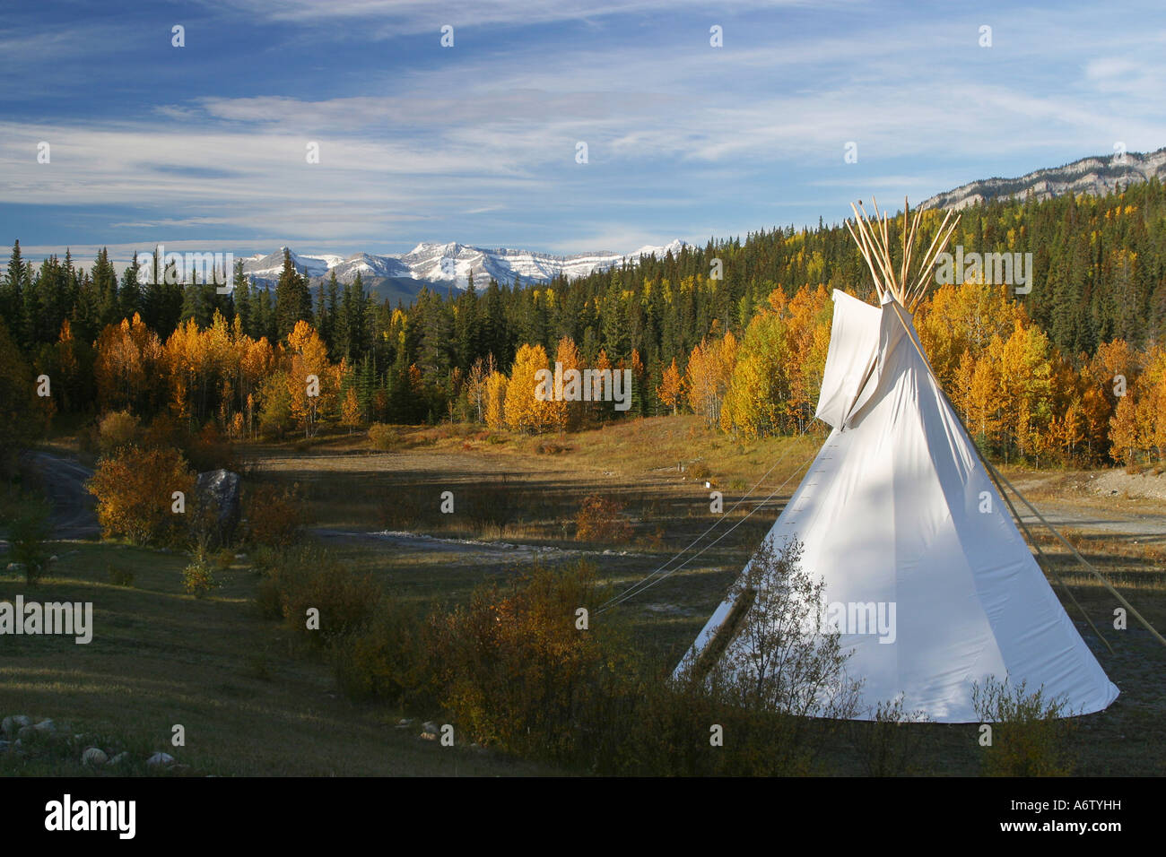 Tipi Wald Herbst Wald In Den Rocky Mountains David Thompson