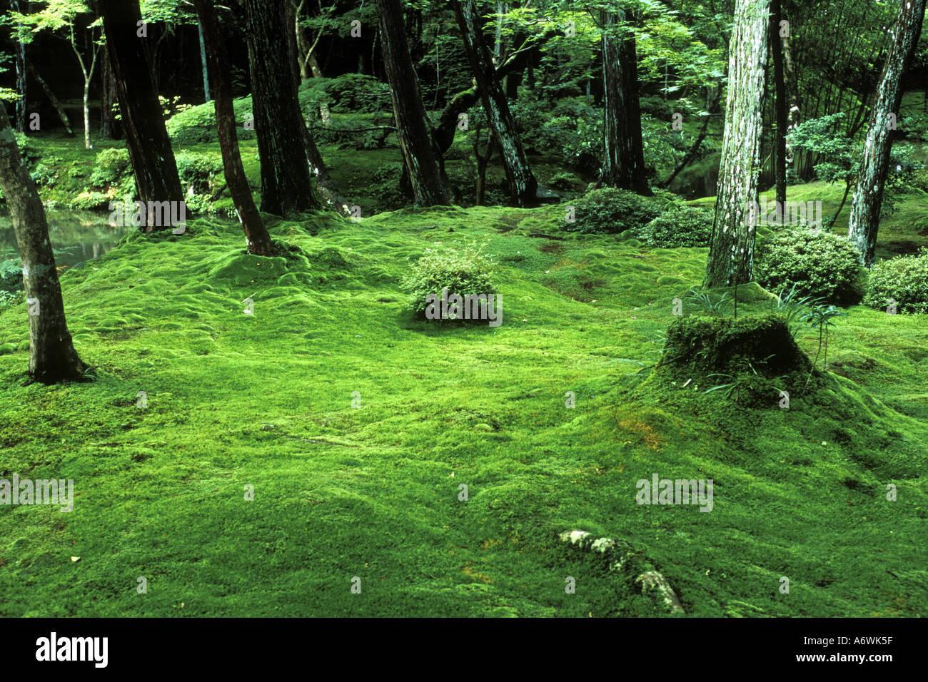 Moos tempel kokedera saihoji kyoto japan stockfoto - Moosgarten kyoto ...