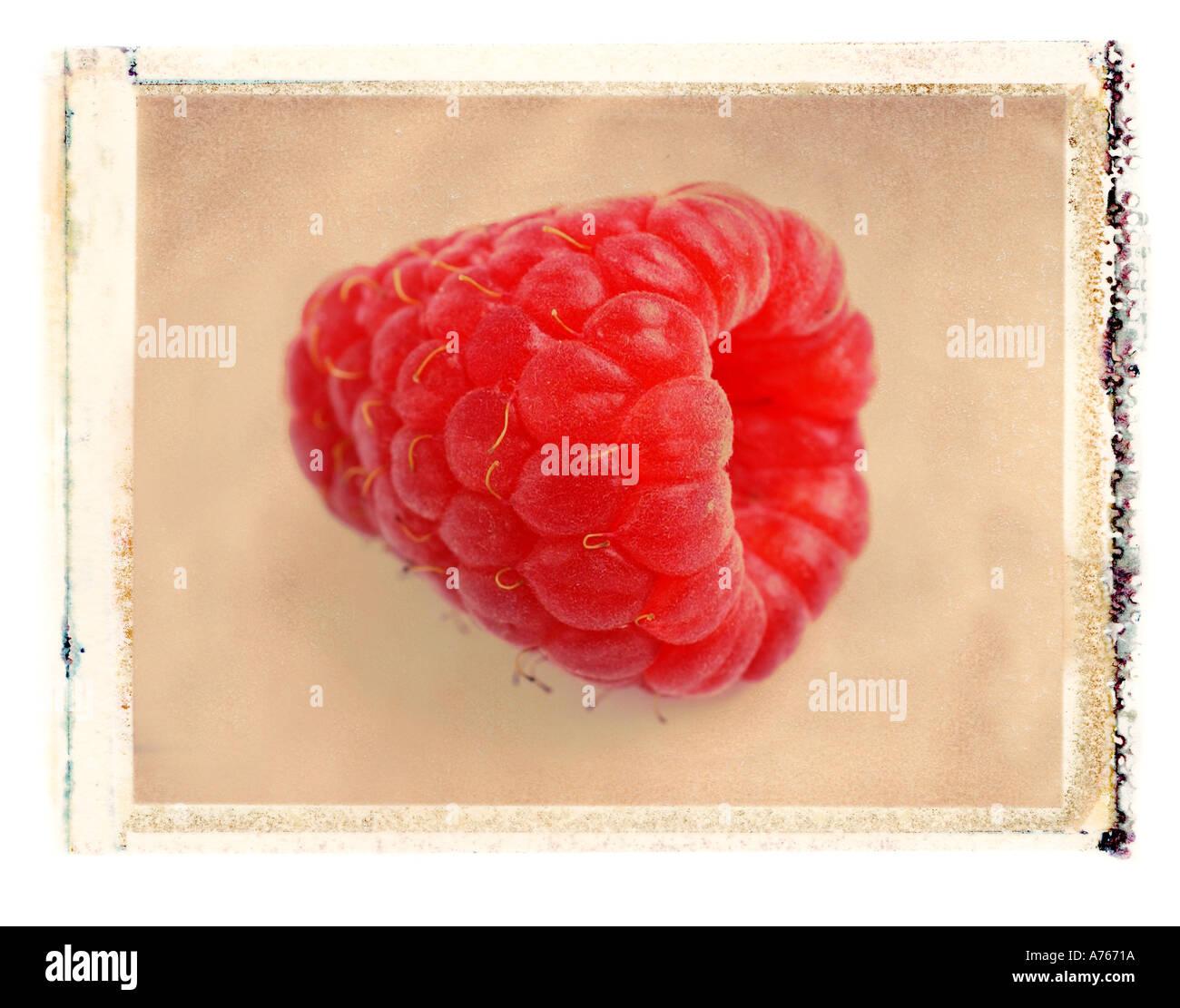 Rote Himbeere Stockbild