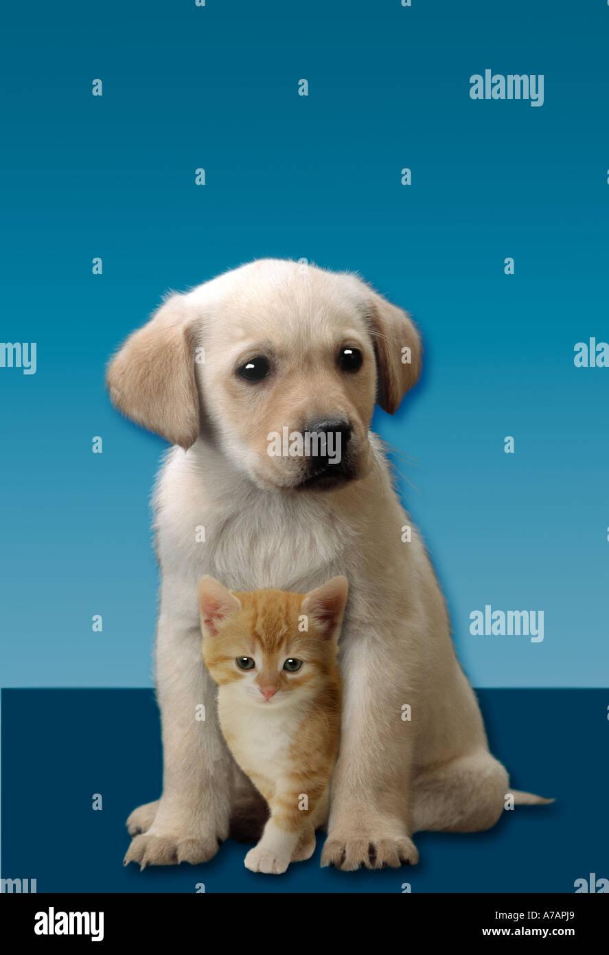 Nett Süße Kätzchen Malvorlagen Zeitgenössisch - Entry Level Resume ...