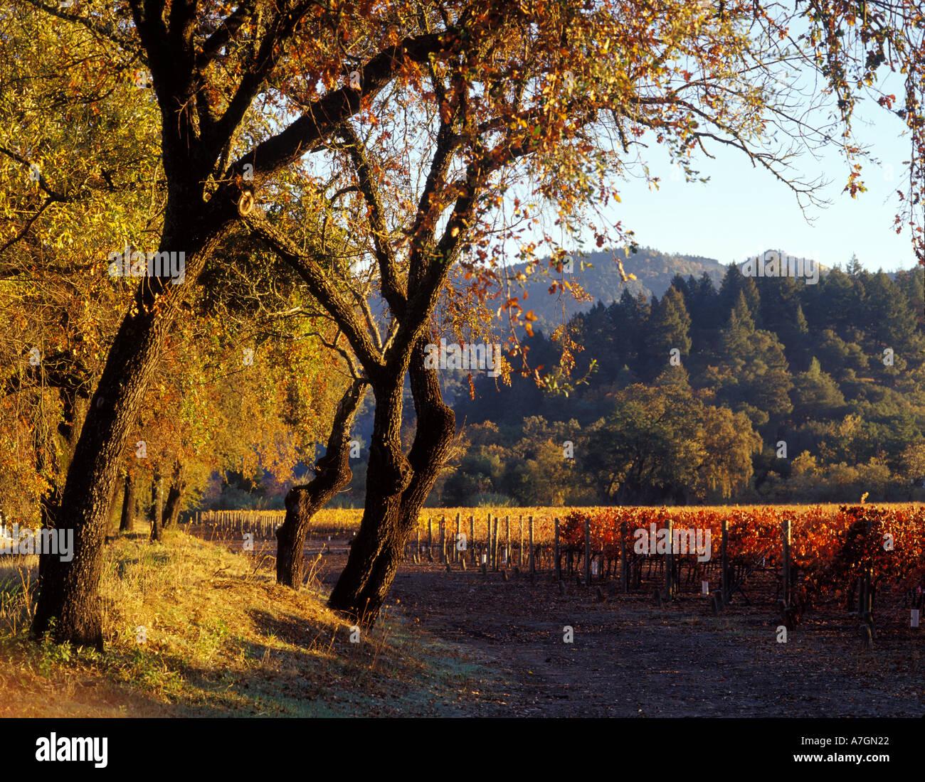 USA, Kalifornien, Napa Valley, Calistoga. Morgensonne überfliegt den Talboden und die Eichen und Weinberge. Stockfoto