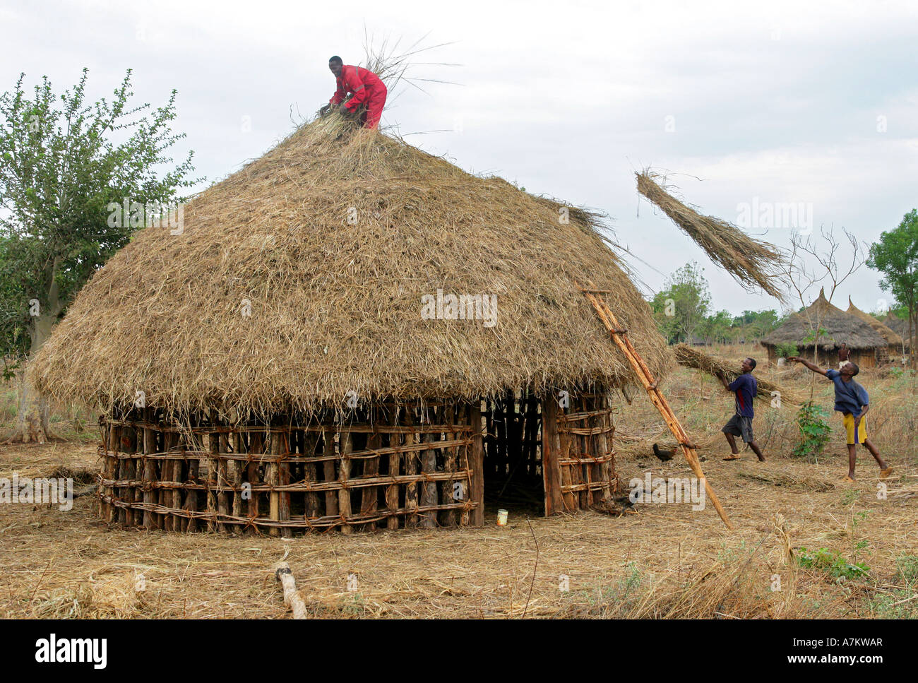 Äthiopien   Traditionelles Dorf Beherbergt Nachbarn Hilfe In Den Bau Eines  Holzhauses