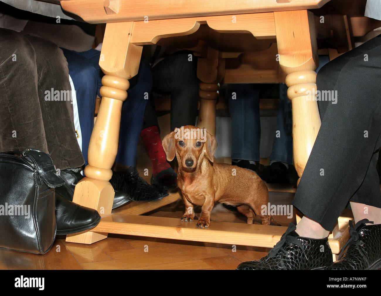 legs under table stockfotos legs under table bilder alamy. Black Bedroom Furniture Sets. Home Design Ideas
