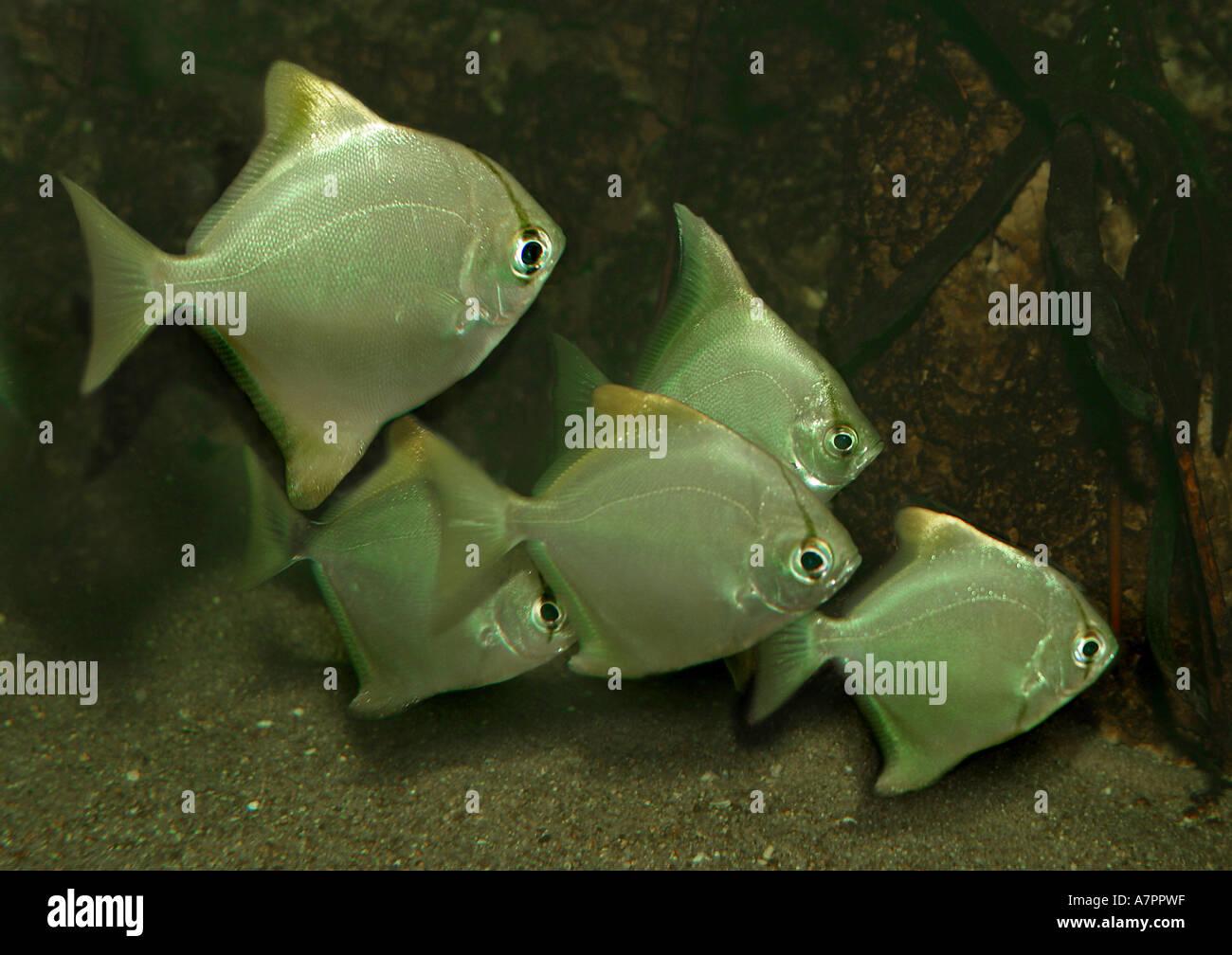 fischschwämer stockfotos fischschwämer bilder alamy