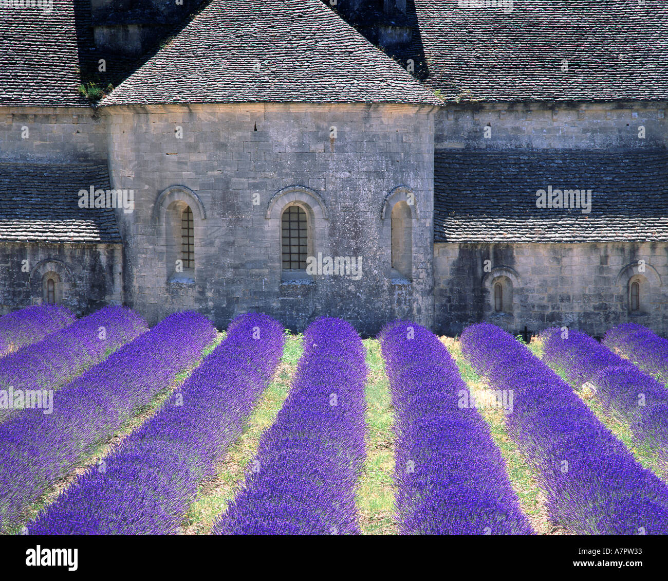 FR - PROVENCE: Abbaye de Senanque in der Nähe von Gordes Stockbild