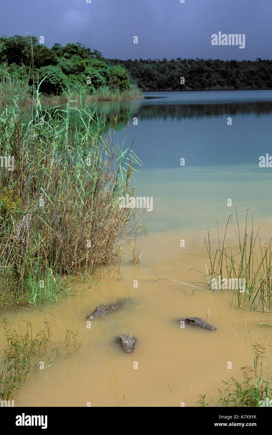 Afrika, Madagaskar, Ambilobe, heiliger See. Nilkrokodile (Crocodylus Niloticus) Stockbild