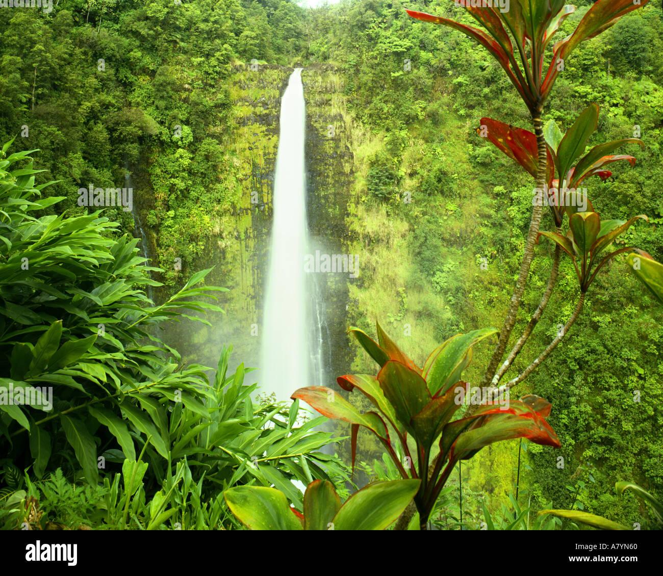 USA - HAWAII: Akaka Wasserfälle auf Big Island Stockbild