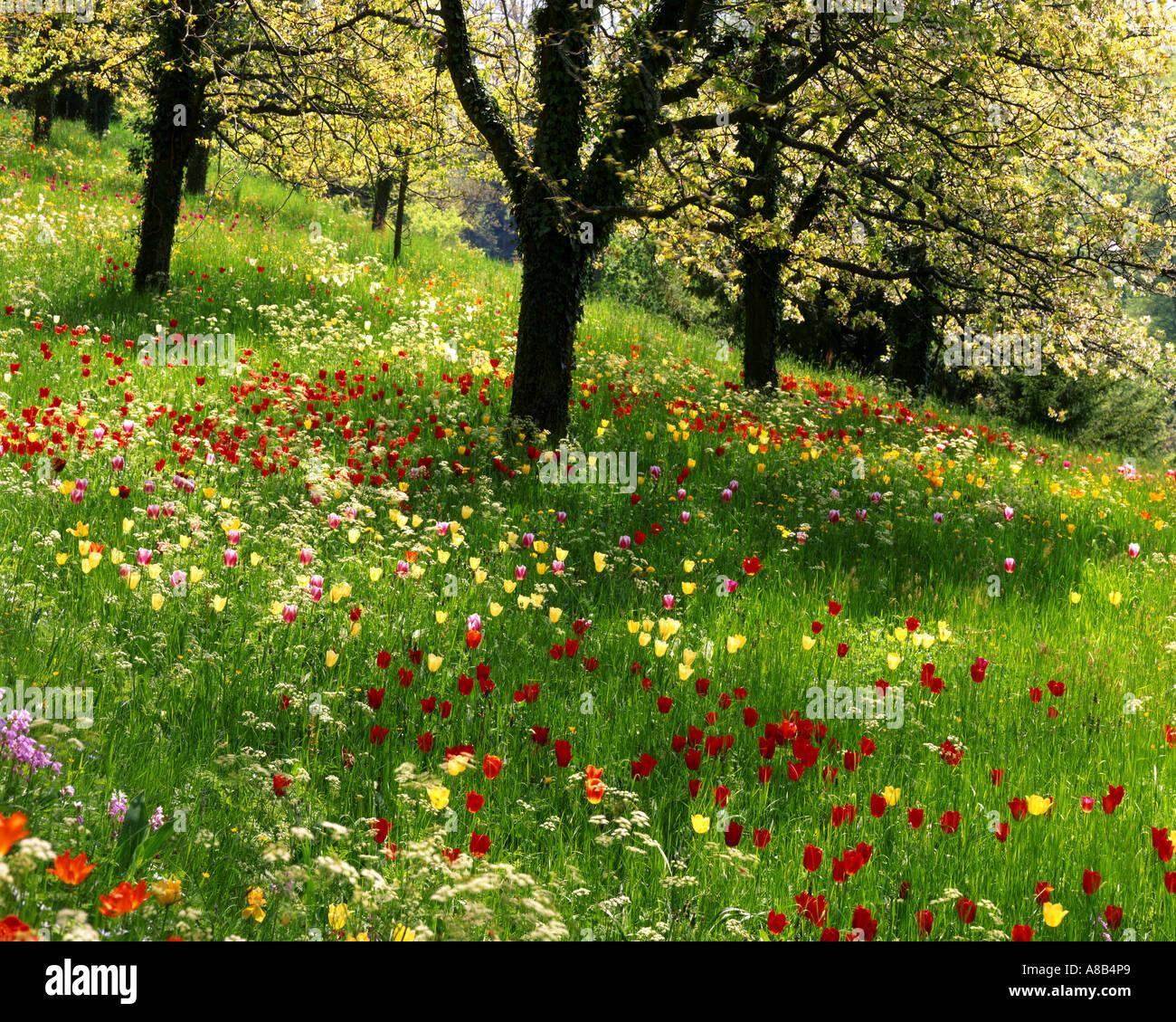 DE - Baden-Württemberg: Frühling auf der Insel Mainau Stockbild
