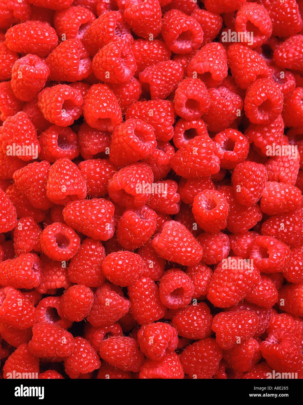Hintergrund der frischen roten Himbeeren Stockbild