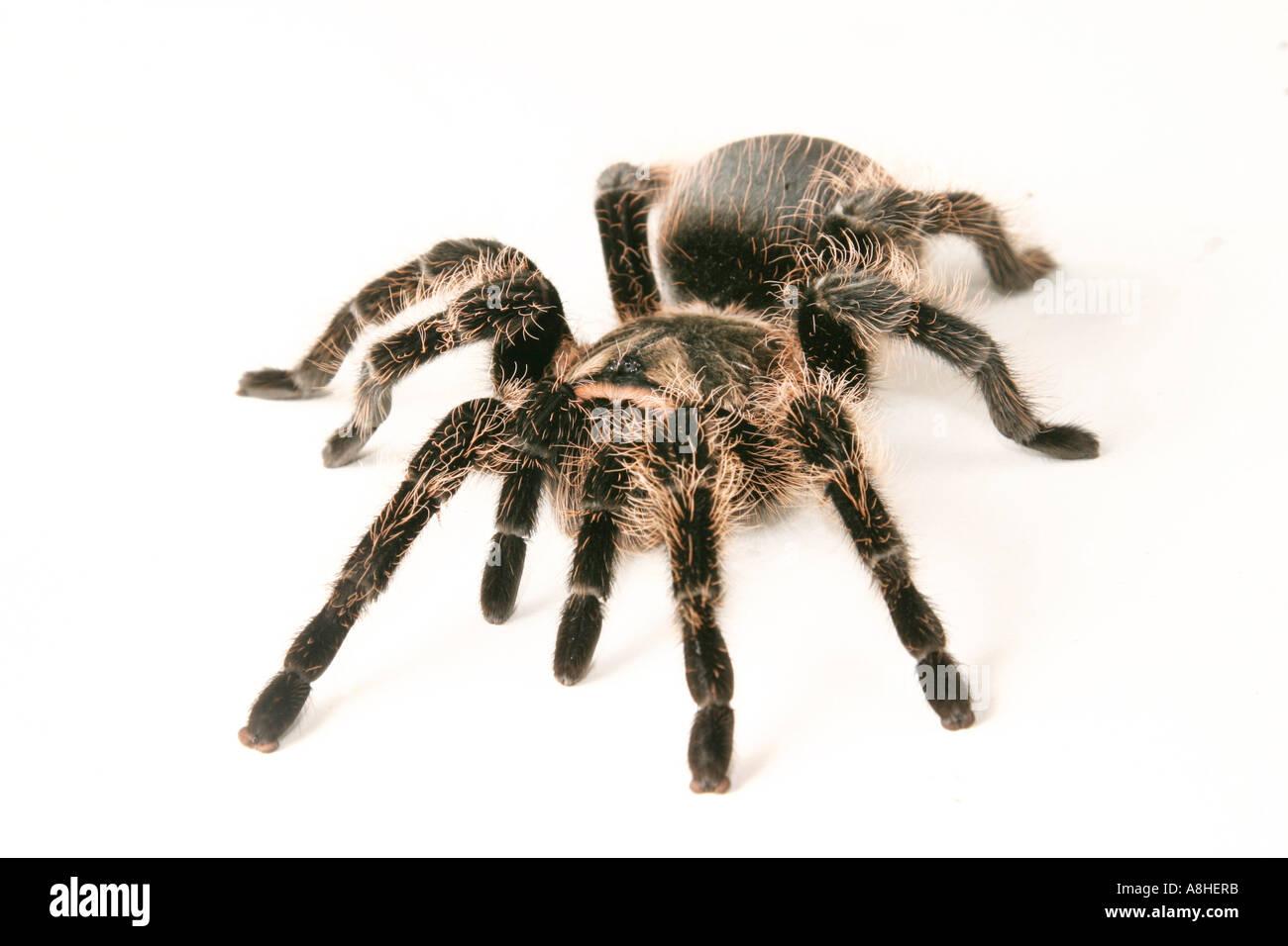 Schön Anatomie Der Spinnen Fotos - Menschliche Anatomie Bilder ...