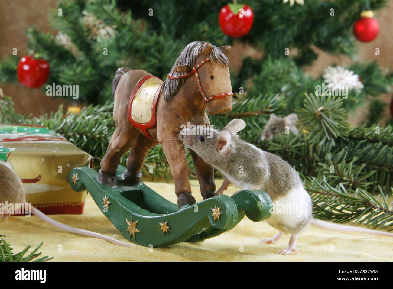 Weihnachten: schicke Maus - Schaukelpferd Stockfoto, Bild: 12225103 ...