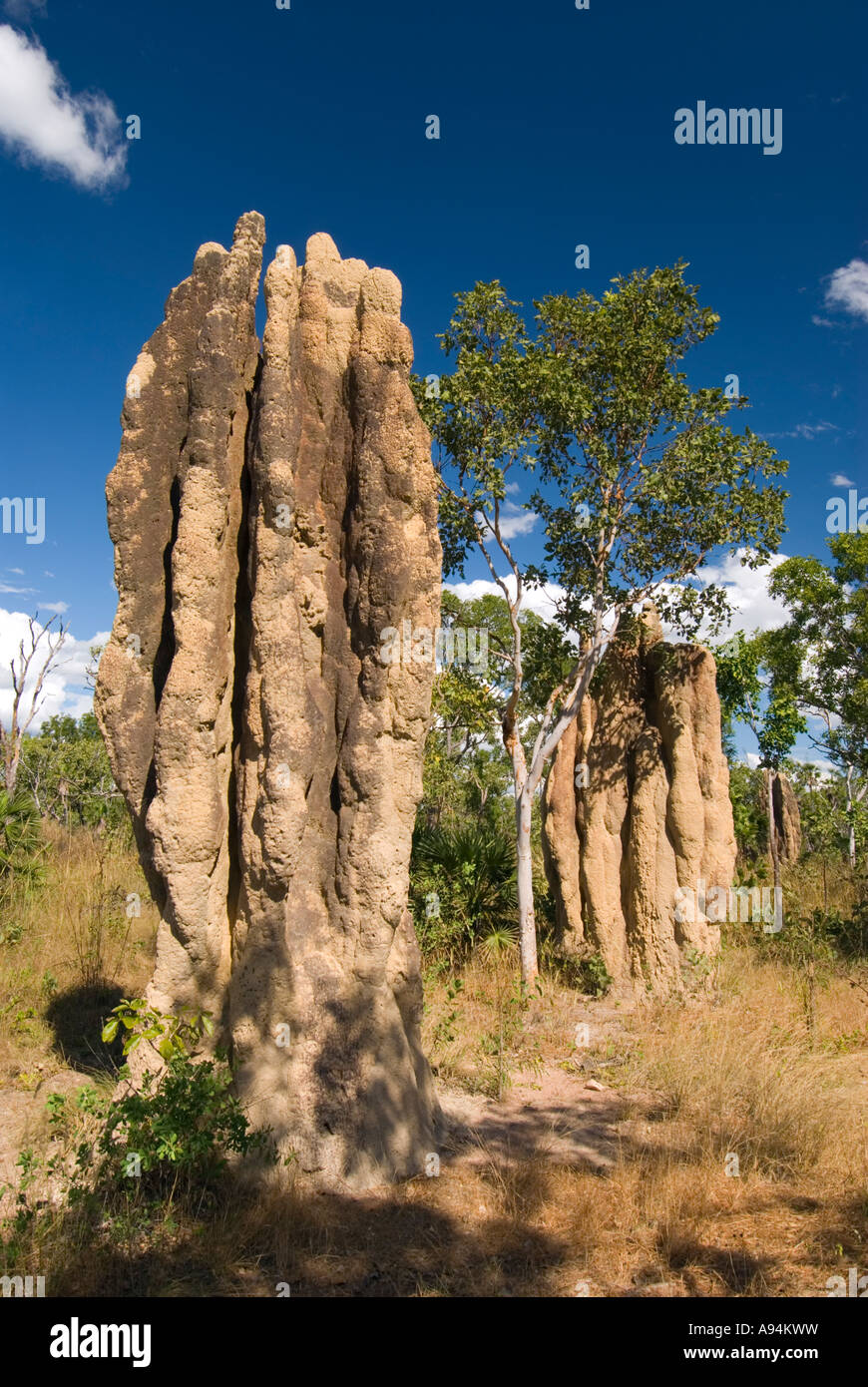Termitenh gel im litchfield national park im northern for Wildparks in der nahe