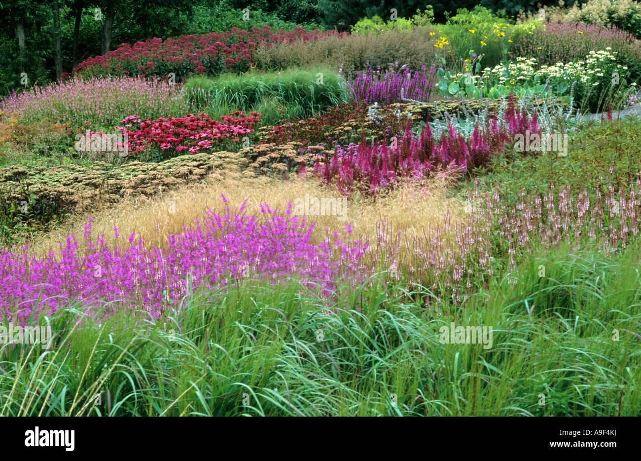 pensthorpe millennium garten norfolk england gr ser lythrum echinacea sedum drift pr rie. Black Bedroom Furniture Sets. Home Design Ideas