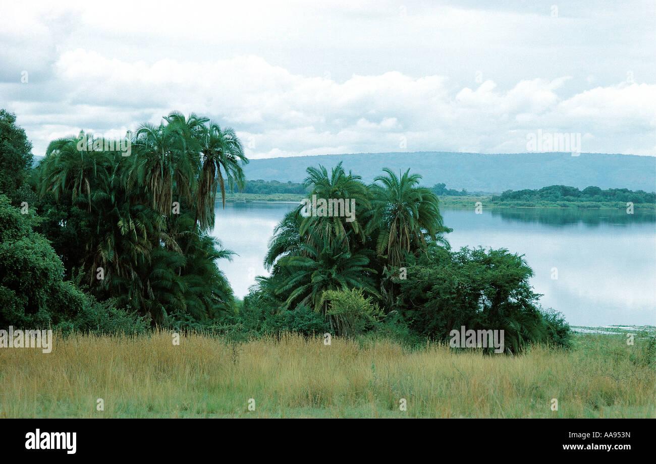 Palmen und Lac Hago Akagera Nationalpark Ruanda dieses Sees ist eine der ultimativen Quellen des Nils Stockbild