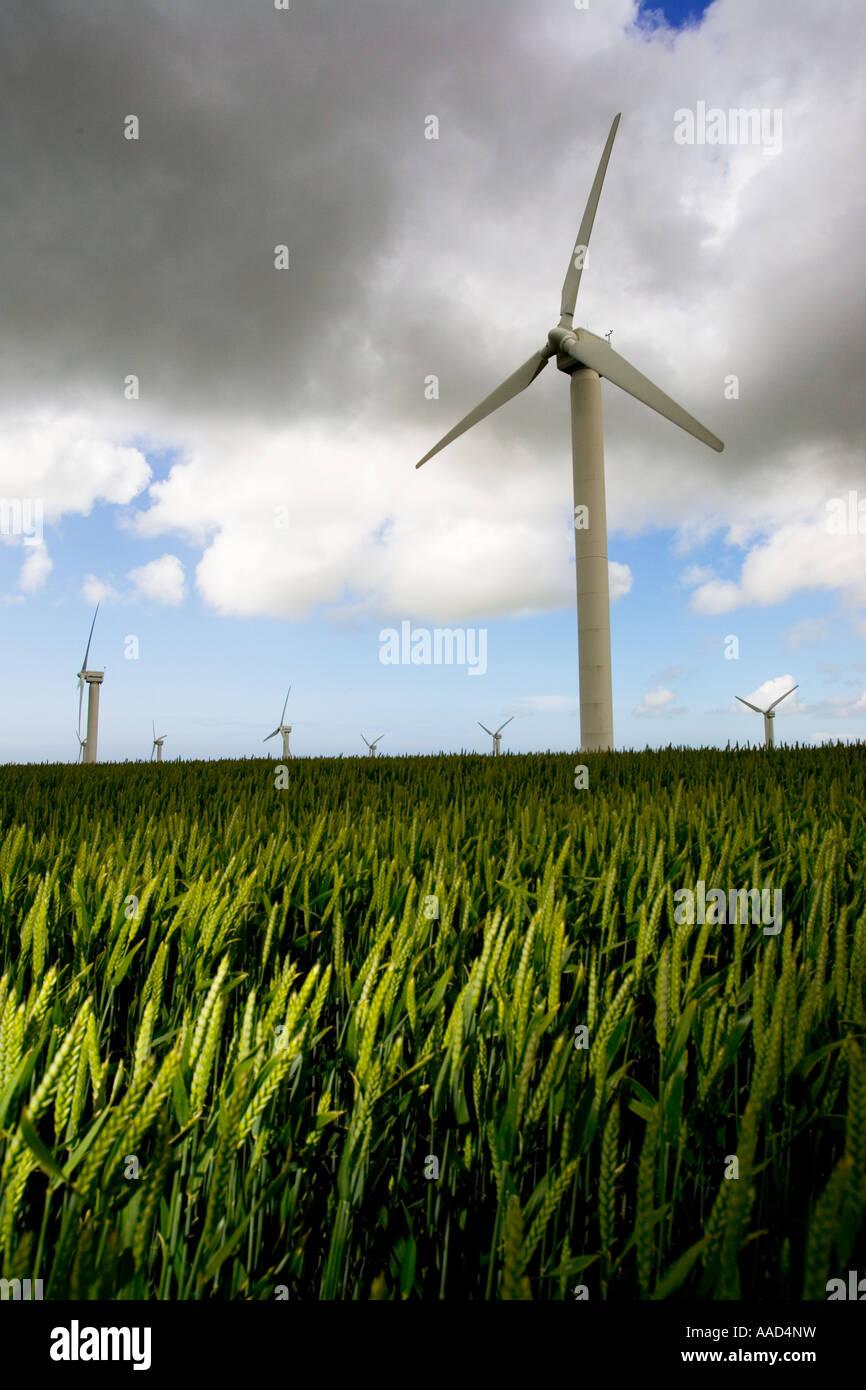 Vier Burrows Wind Farm Truro in eine Mais-Feld-Ackerland während Gale zwingen, Wind und Regen Cornwall England Stockbild