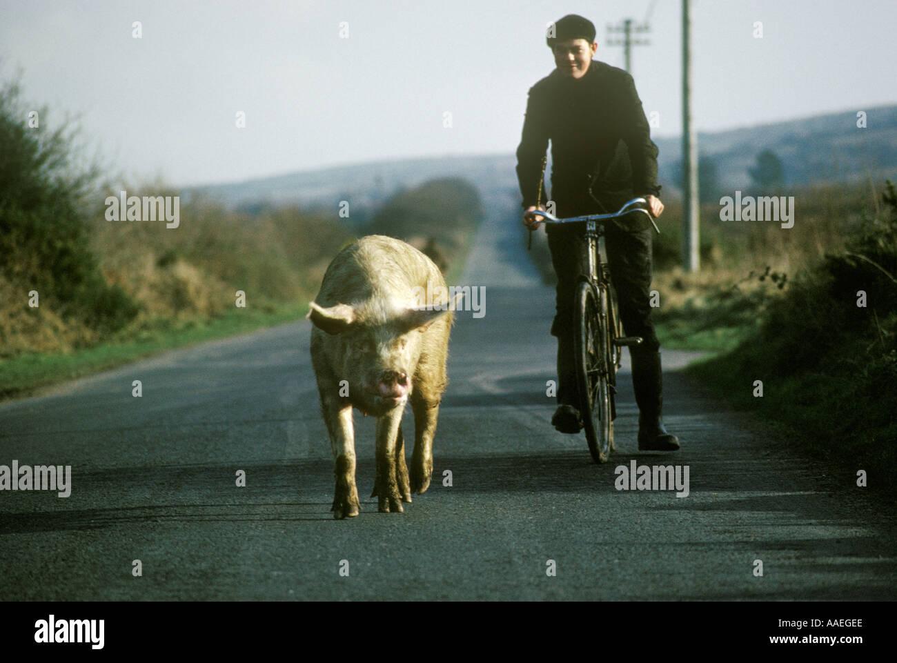 Ungewöhnlich Benutzerdefinierte Bauen Schwein Drahtzaun Design Fotos ...