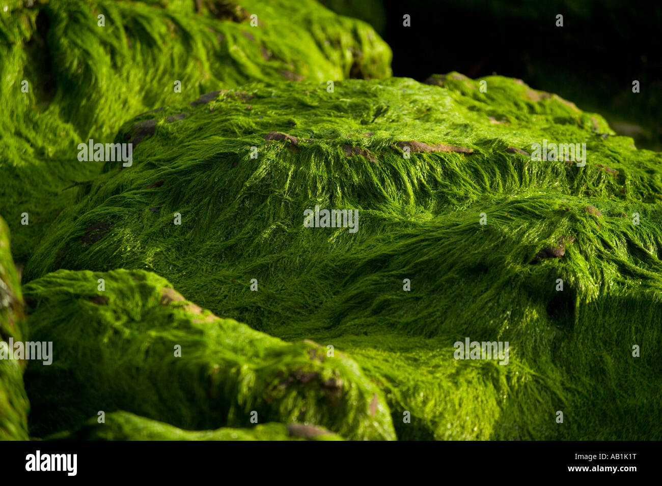 algae stockfotos algae bilder alamy. Black Bedroom Furniture Sets. Home Design Ideas