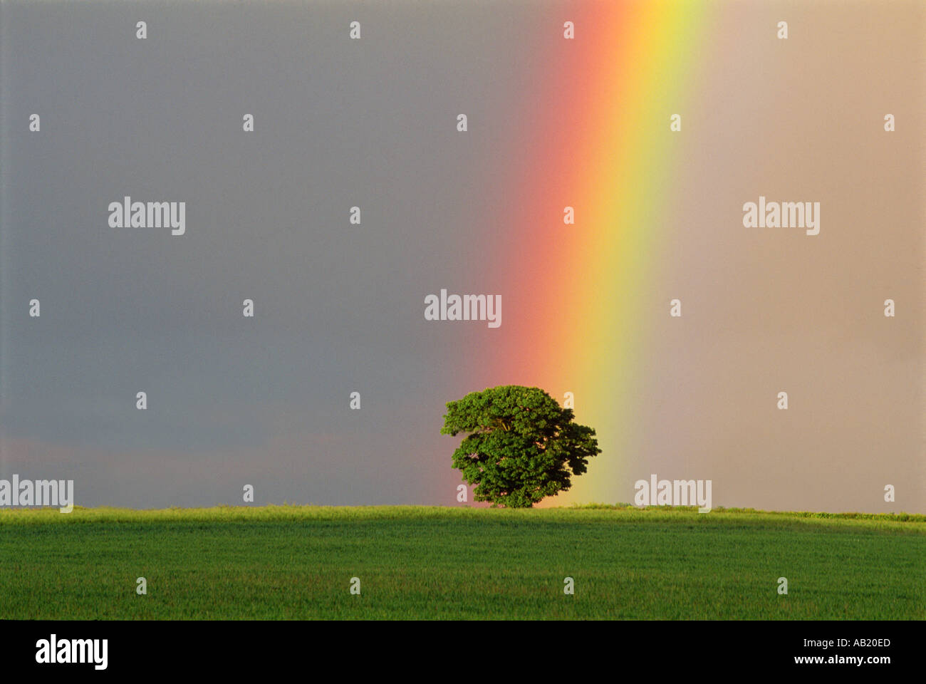 Regenbogen über Eiche in Gloucestershire, England UK Stockbild