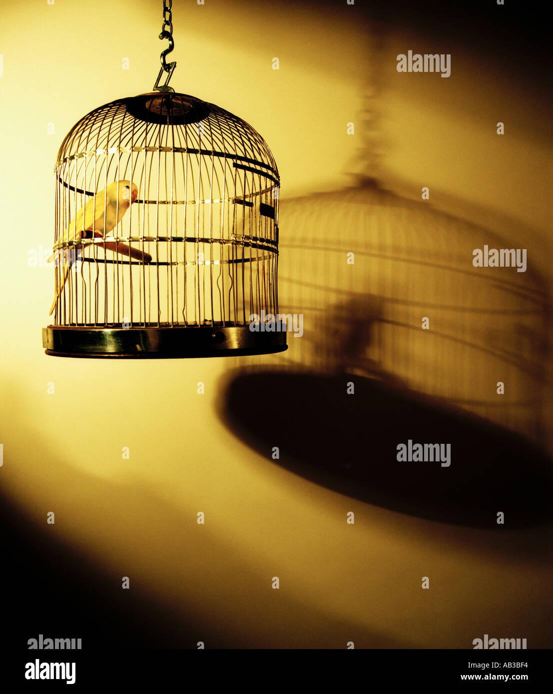 Wellensittich Vogel im Käfig Stockbild