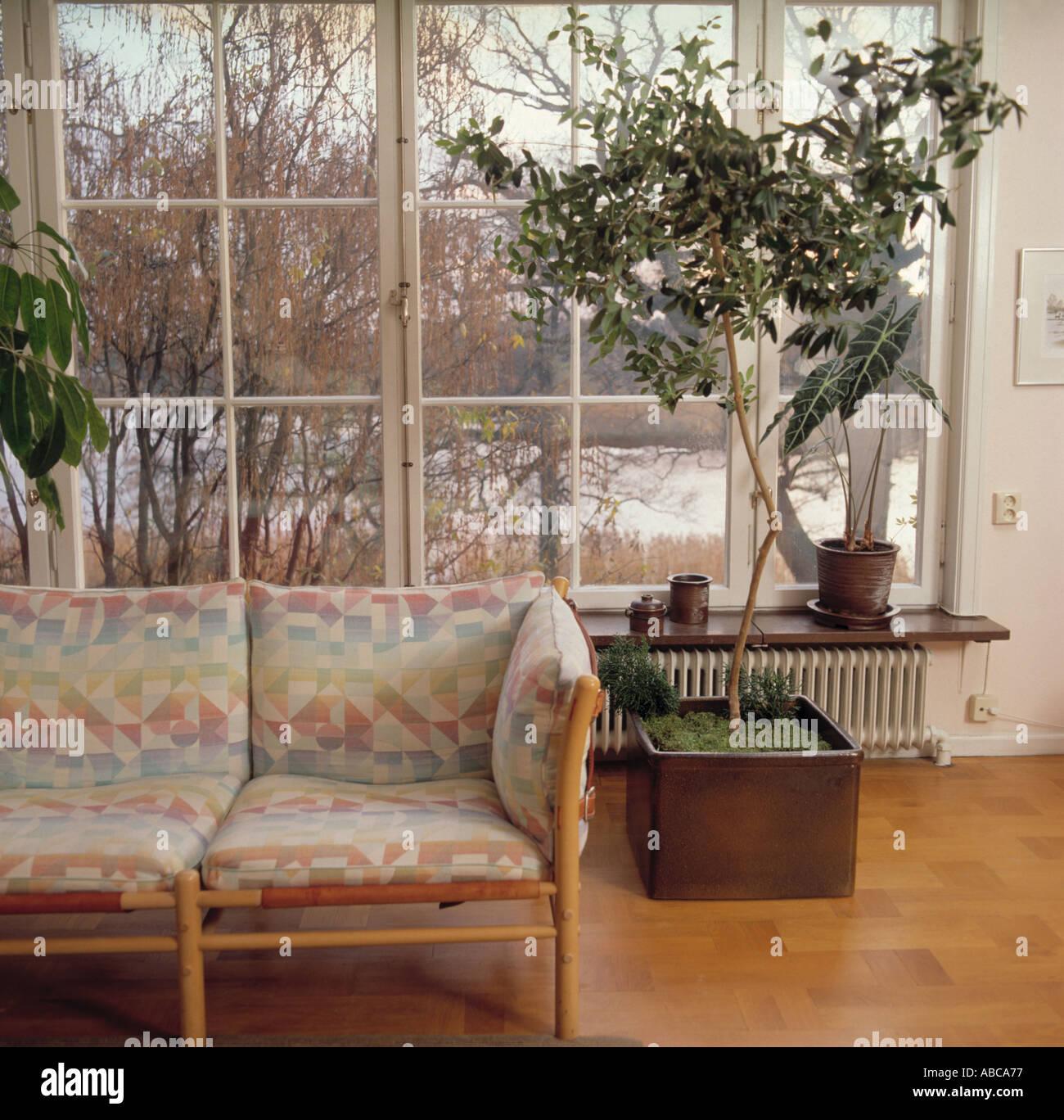 gemusterte kissen auf blasse holz sofa im wohnzimmer mit gro er baum im topf vor gro e fenster. Black Bedroom Furniture Sets. Home Design Ideas