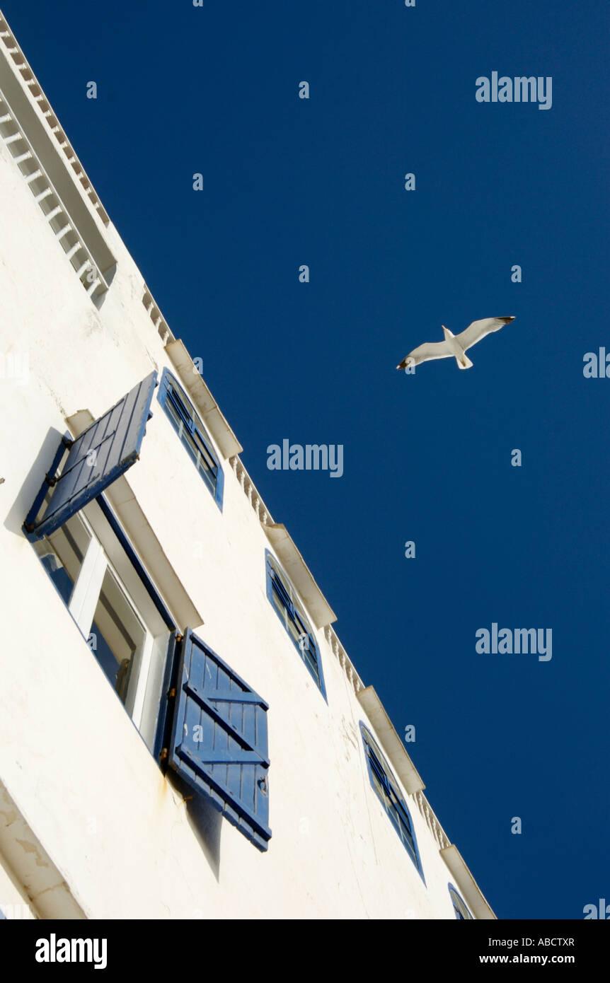 Möwe im Flug, Essaouira, Marokko Stockbild