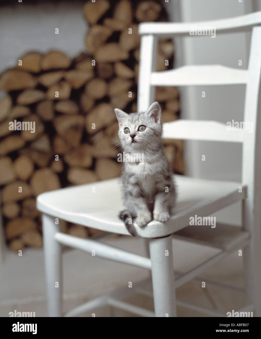 Katze auf Stuhl Stockbild