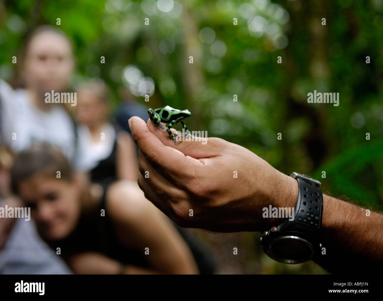 Ökotouristen beobachten einen grünen und schwarzen vergiften Frosch auf einer geführten Regenwaldwanderung Stockbild